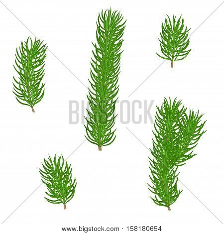 Set of isolated green fir branches with needles on a white background. Christmas tree. Hand drawn vector illustration.