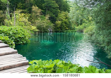 Small pond with breathtaking emerald water among green foliage. Plitvice lakes national park Croatia