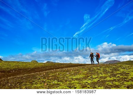 hikers on the trail in the Islandic mountains. Trek in National Park Landmannalaugar, Iceland. valley is covered with bright green moss