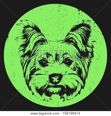 Portrait of Yorkshire Terrier Dog. Hand-drawn illustration. T-shirt design. Vector