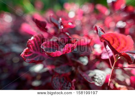 Beautiful colorful Ajuga flowers outdoors in nature