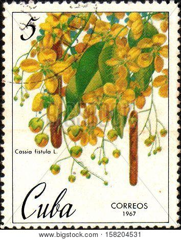 Cuba- circa 1967: Stamp printed in Cuba shows image Cassia fistula, circa 1967