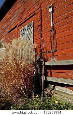 Long autumn colored grass located in front of an old red barn with a hanging spade shovel and leaning cow stanchion