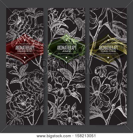 Set of 3 vector banners with Damask rose, jasmine, ylang-ylang sketch on black background. Aromatherapy series. Great for traditional medicine, perfume design, cooking or gardening.