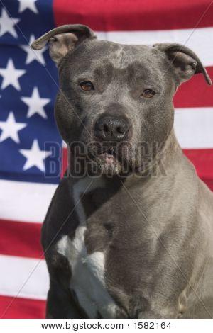 Beuatiful Dog
