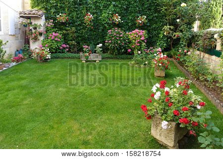 French garden with deep green lawn, virginia creeper, hydrangea and geranium flower