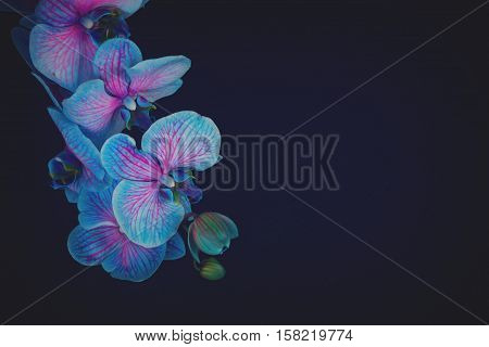 Bunch of fresh blue orchids on black background with copy space, retro toned