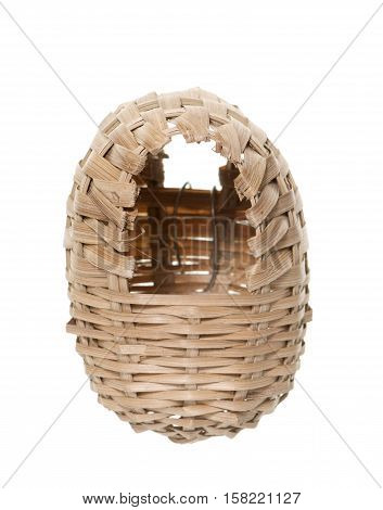 osier nest bird in front of white background