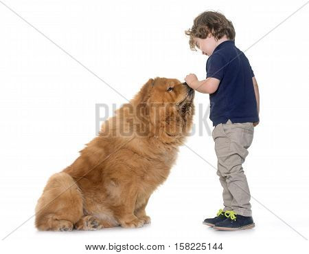 chow chow dog and little boy in front of white background