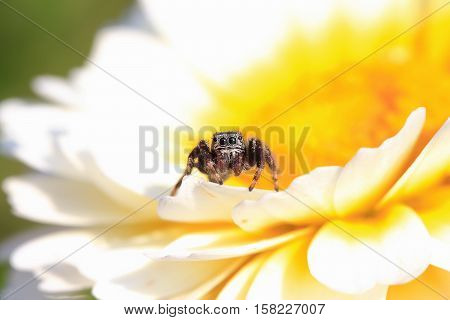 little black spider horse is sitting on a bright flower