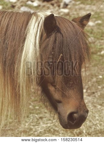 A pony with the blonde streak in his mane