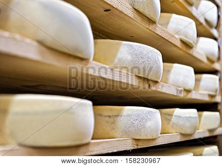 Aging Cheese At Maturing Cellar Franche Creamery Comte