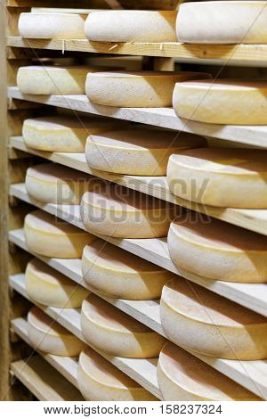 Comte Aging Cheese On Ripening Cellar Franche Dairy