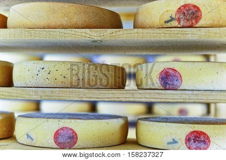 Comte Aging Cheese On Ripening Cellar Franche Creamery