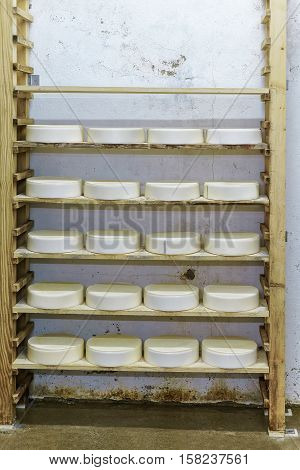 Comte Young Cheese In Maturing Cellar Franche Creamery
