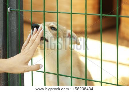 Female hand touching fence of animal shelter with cute puppy behind it
