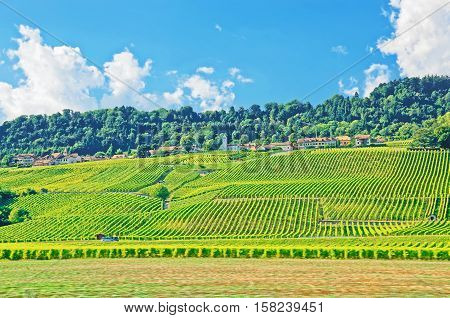 Fields In A Swiss Village In Yverdon Les Bains In Jura Nord Vaudois Vaud Switzerland