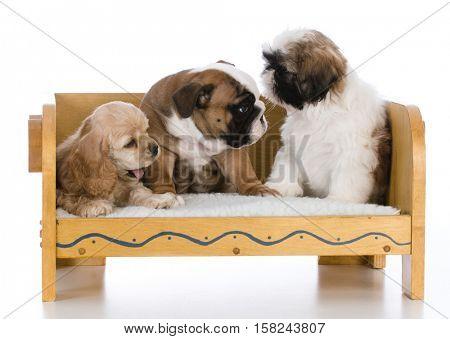 three different breeds
