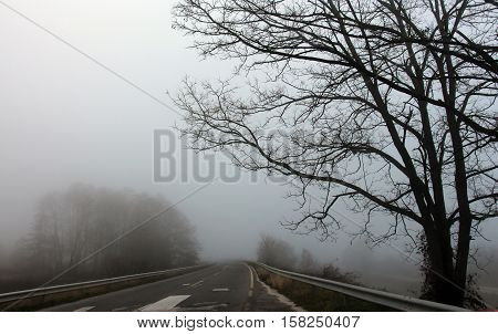 picture of a The road in the fog
