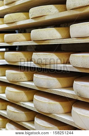 Rack Of Aging Cheese At Ripening Cellar Franche Comte Creamery