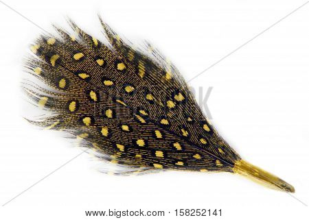 feather covert plumage spotted  isolated on white