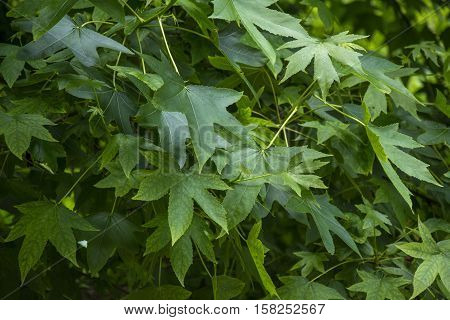 Photo of several leaves with green saturated and sunlight