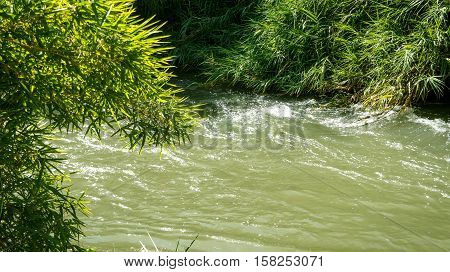 View of the slow river flow and the bushes growing along the banks of the Jordan River in Israel close-up.