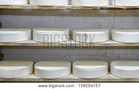 Shelves Of Young Cheese In Maturing Cellar Franche Comte Creamery