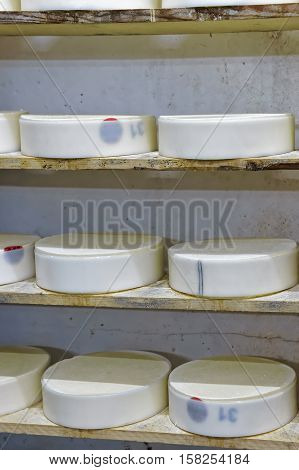 Shelves Of Young Cheese In Ripening Cellar Franche Comte Creamery