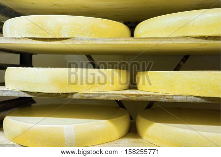 Stack Of Aging Cheese At Ripening Cellar Franche Comte Creamery