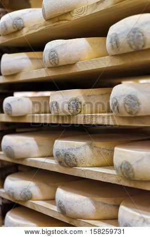 Wheels Of Aging Cheese In Maturing Cellar Creamery Franche Comte