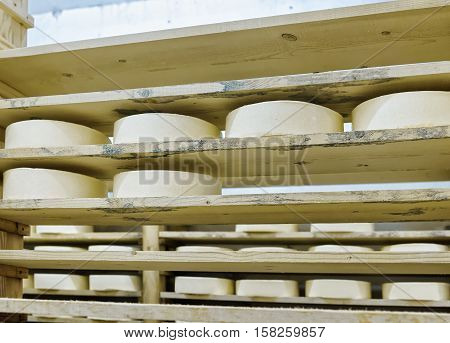 Wheels Of Young Cheese In Maturing Cellar Franche Comte Creamery