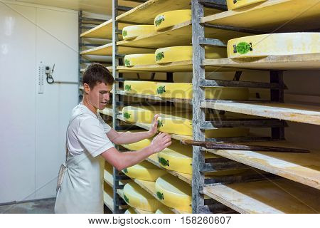 Worker And Aging Cheese At Maturing Cellar Franche Comte Creamery