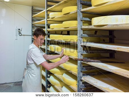 Worker And Aging Cheese In Maturing Cellar Franche Comte Creamery
