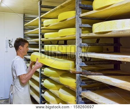 Worker At Maturing Cellar With Aging Comte Cheese Of Creamery