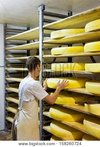 Worker At Ripening Cellar With Aging Conte Cheese In Creamery