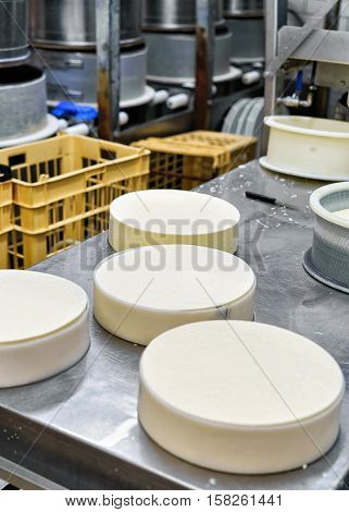 Young Gruyere Comte Cheese Pressed In Special Forms Dairy
