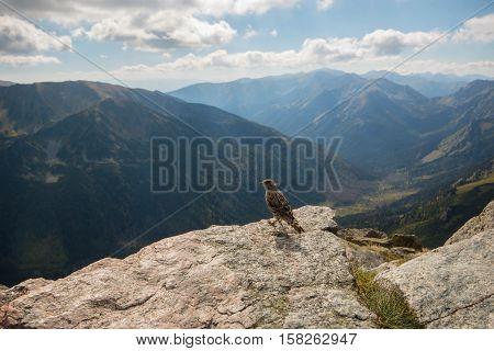 Tatry. Poland and Slovakia boundary autumn landskapes. Little bird on the rock