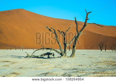 Ancient picturesque dried-up tree. The dried lake Deadvlei. Namibia, ecotourism in Namib-Naukluft National Park