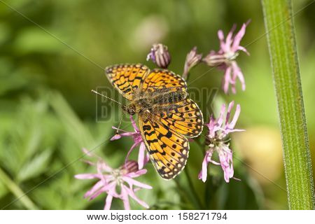 yellow butterfly sit on pink flower on meadow