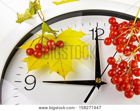 9 o'clock. Clock face with yellow leaves and red ripe viburnum. Autumn time.