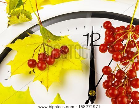 12 o'clock. Clock face with yellow leaves and red ripe viburnum. Autumn time.