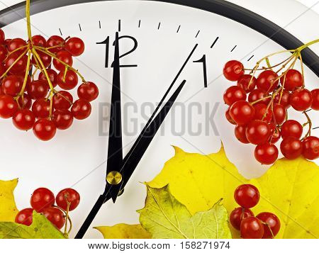 1 o'clock. Clock face with yellow leaves and red ripe viburnum. Autumn time.