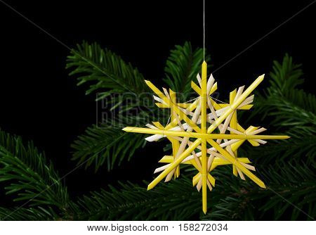 Yellow straw star Christmas decoration over fir branch. Handmade decor for windows, as gifts or to hang on xmas tree, traditionally made from natural straw. Macro photo front view close up over black.
