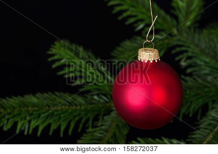 Red glass bauble, a spherical Christmas ornament, usually hung on a Christmas tree.  Christmas ball, a Xmas tree decoration in front of a fir branch. Front view macro object photo on black background.