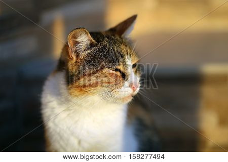 Photo portrait of a cat at sunset