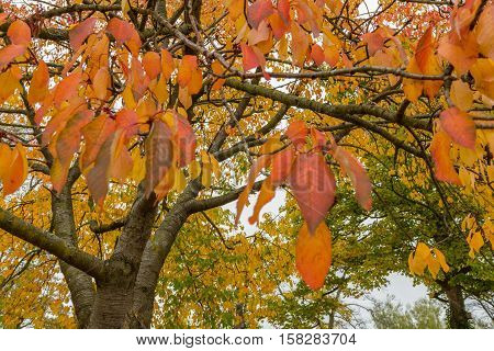Colorful Tree Leaves In Autumn At Leases Park, Newcastle, England