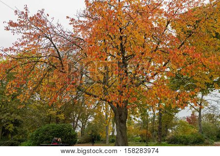 Colorful Trees In Autumn At Leases Park, Newcastle, England