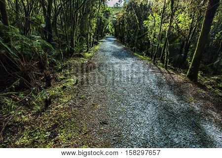 natural rain forest trial in matheson lake fox glacier new zealand
