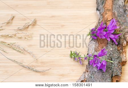 Closeup of violet purple bell-flowers with stems and green leaves with a bunch of spikelets on old wooden bark with rough texture background on a light wooden board card copy space